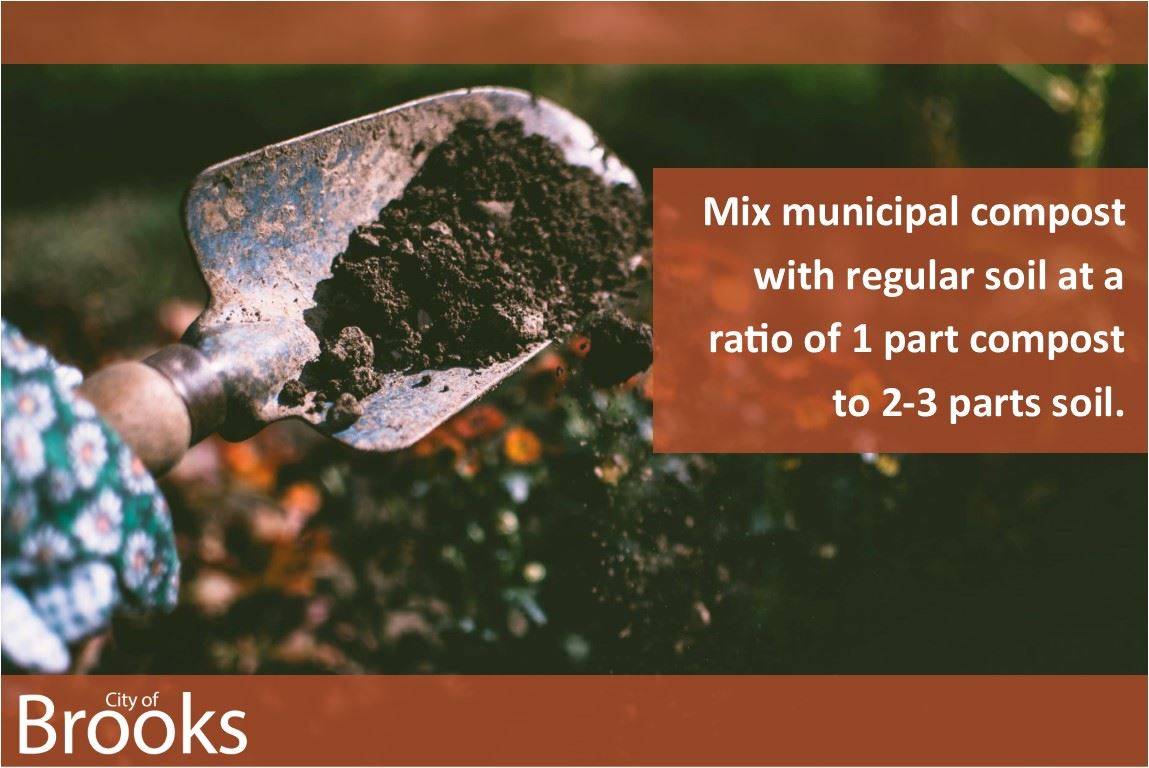 Mix municipal compost with regular soil at a ratio of 1 part compost to 2 to 3 parts soil